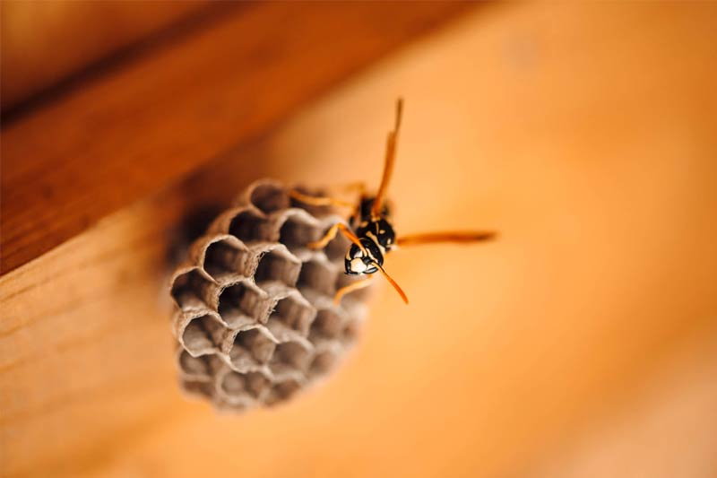 Paper wasp on a honeycomb